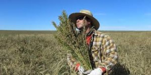 ryanloflin-harvest
